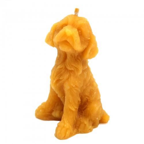 Pies mały - forma