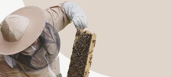 Polska marka odzieży pszczelarskiej